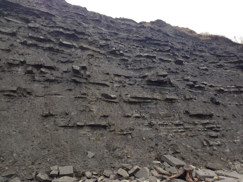 fossil bearing cliff at Lyme